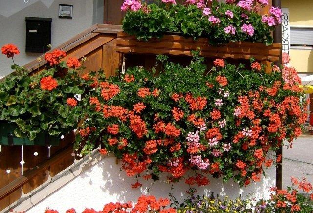 Bahçe ve Balkon İçin Çiçekler