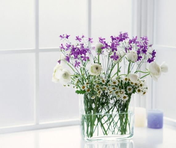 Evler İçin Bitki Modelleri