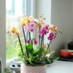 renkli ev bitkileri