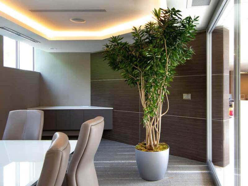ofis bitkileri neler