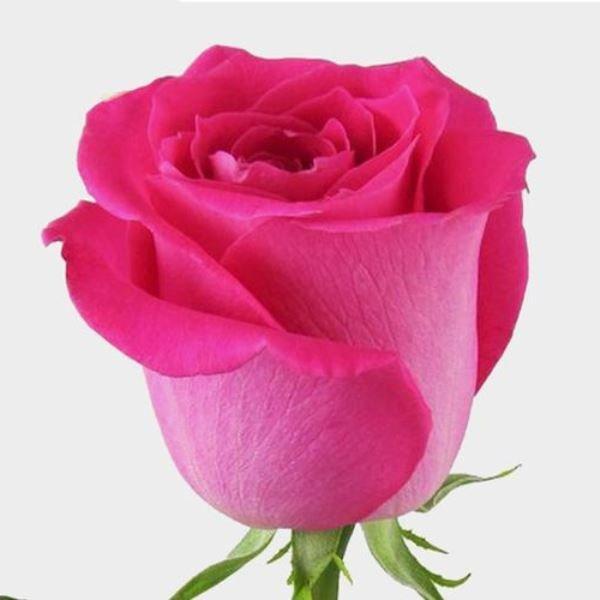 Vazoda güllerin ömrü nasıl uzatılır