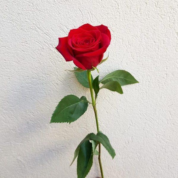 vazodaki çiçeklerin uzun ömürlü olması için